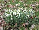 Frühling in Nemt