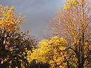 Herbst in Nemt