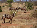 Tierbilder aus Afrika vom Nemter Gerhardt Kuhnath_5