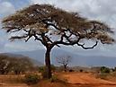 Tierbilder aus Afrika vom Nemter Gerhardt Kuhnath_9